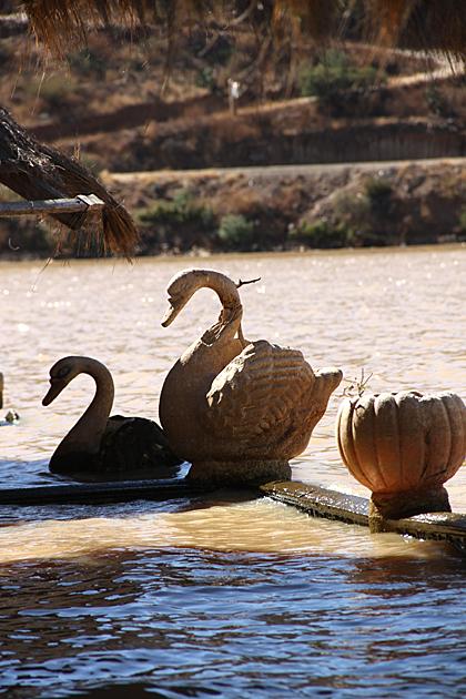 Swan Angostura