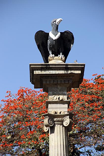 Bolivia Condor
