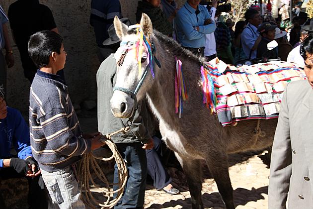 Money Donkey