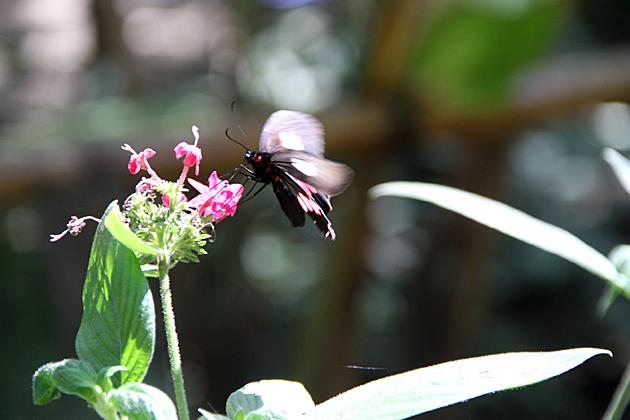 Butterfly Swing
