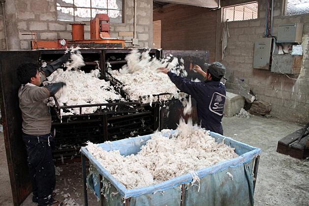 Dry Wool
