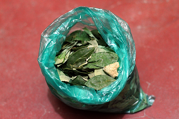 How to Chew Coca Leaves