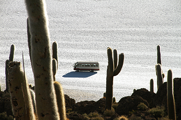 Cactus Bus
