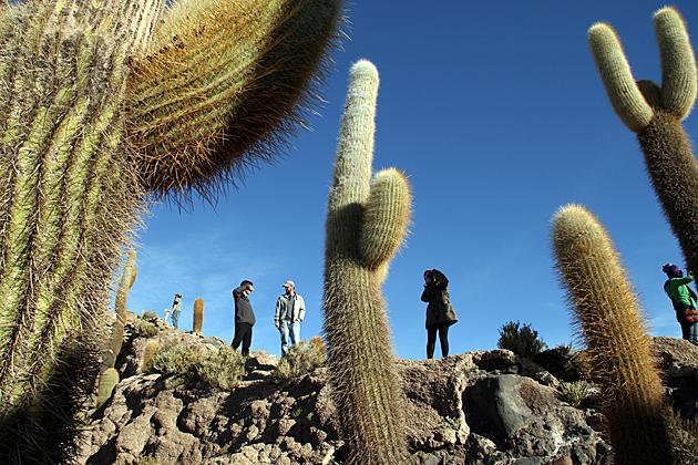 Cactus Group Shot