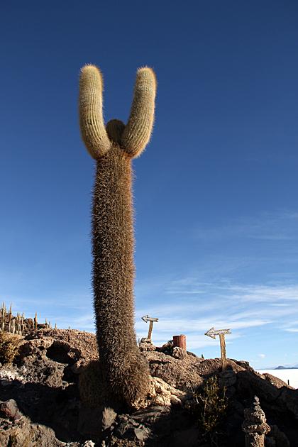 Cactus This Way
