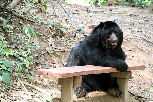 Balu The Bear