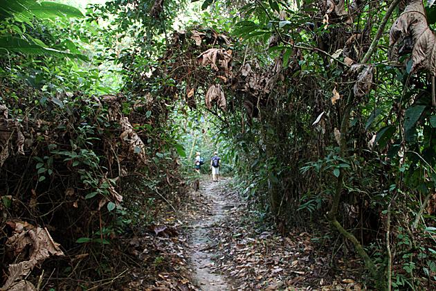 Jungle Gate