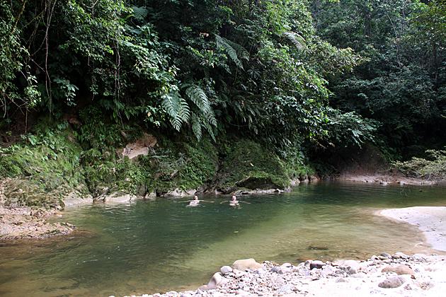 Swimming in the Jungle