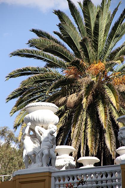Palm Boys