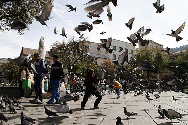 Bird Attack La Paz