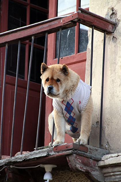 Cute Fashion Dog
