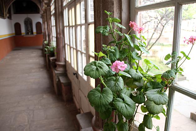 Flowers Potosi