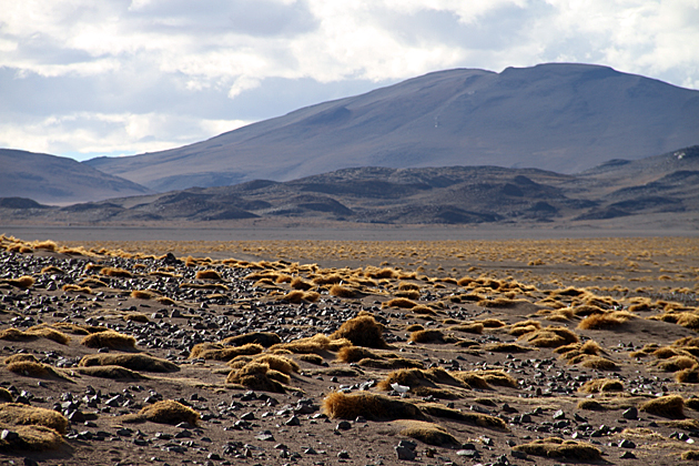 Desert Bolivia