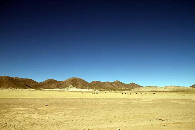 Llama Fields