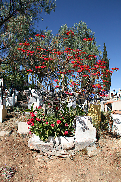 Red Grave