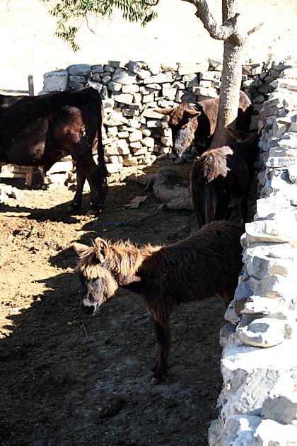 Donkey Farm