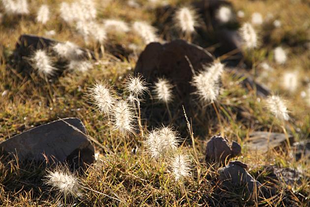 Wild Nature Bolivia