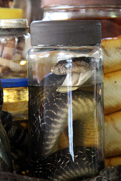Canned Snake