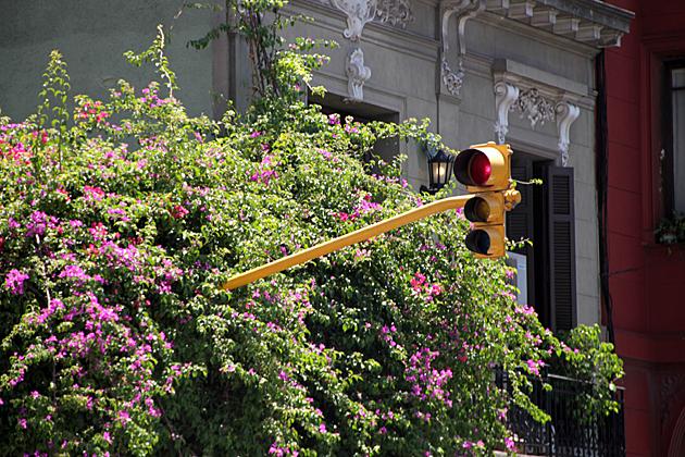 Flower Traffic