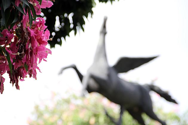 Pegasus Buenos Aires