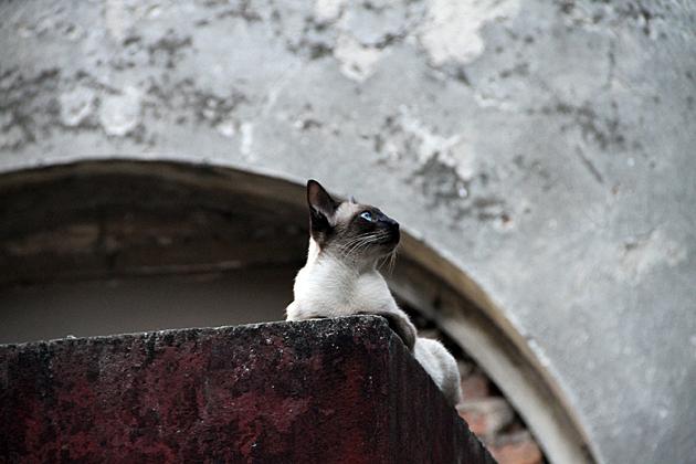 Buenos Aires Cat