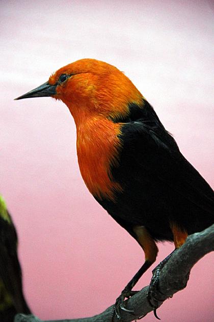 Bird Argentina