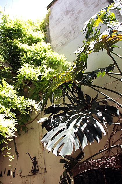 Court Yard Jungle