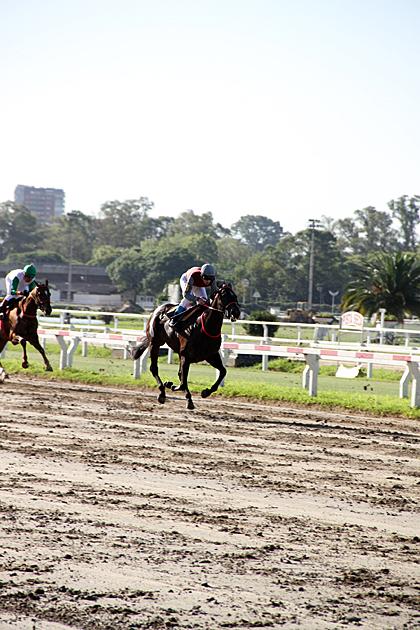 Argentina Horse Race