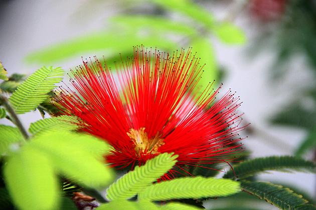 Argentina Flowers