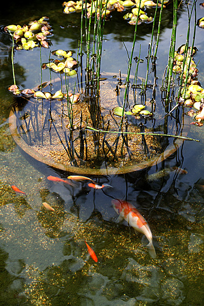 Pond Busan
