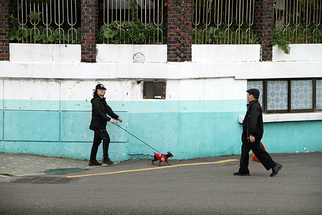 Walking Dog Korea