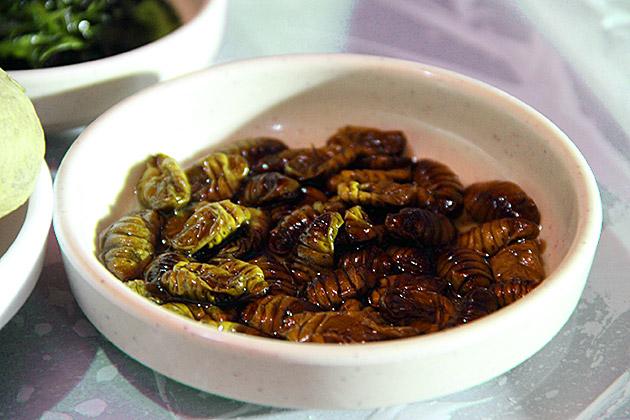 Silk-Worm-Larvae-Korea
