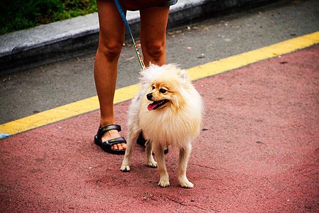 Dog Busan