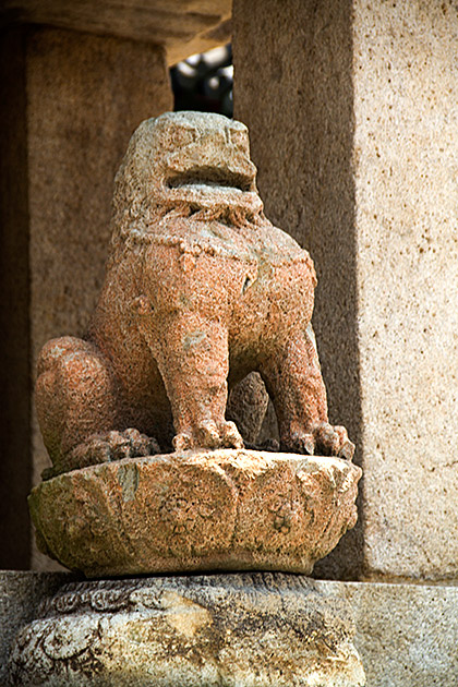 Korean Lion