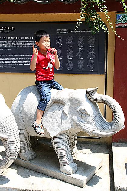 Elephant Boy Korea