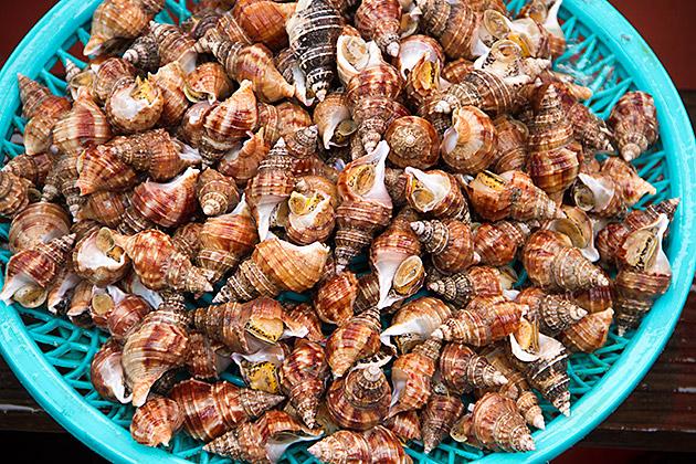 Korean Snail