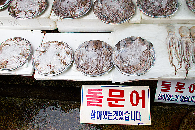 Korean Squid