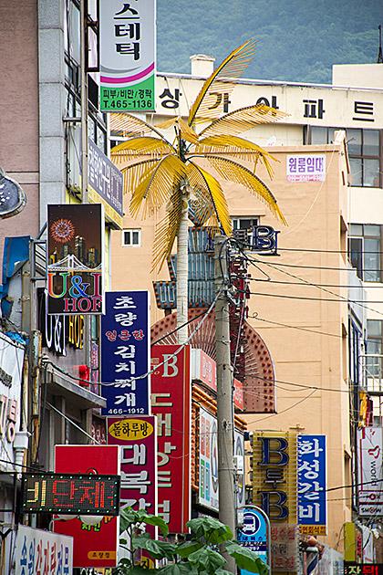 Palm Tree Korea