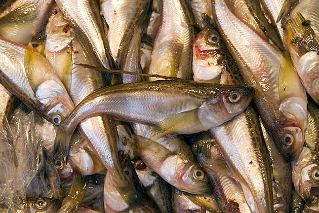 Fresh Fish Korea
