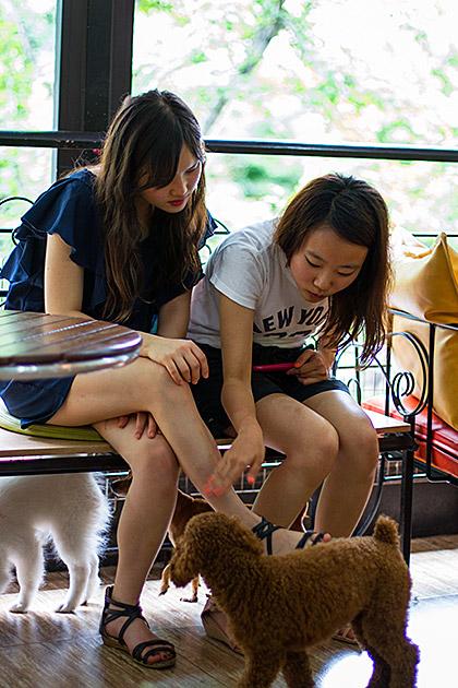 Dog Cafe Busan
