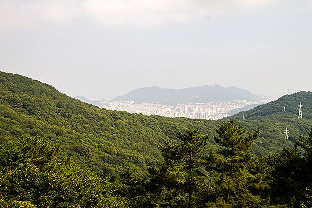 Busan Forrest