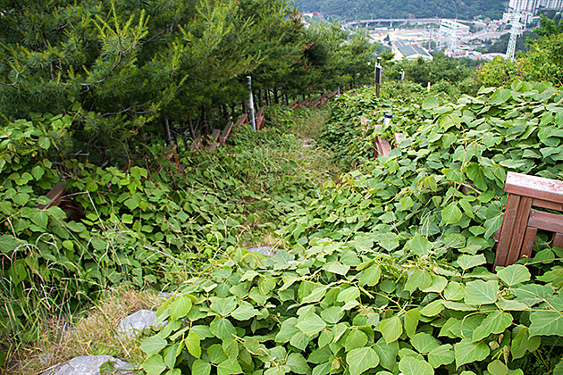 Secret Path Korea