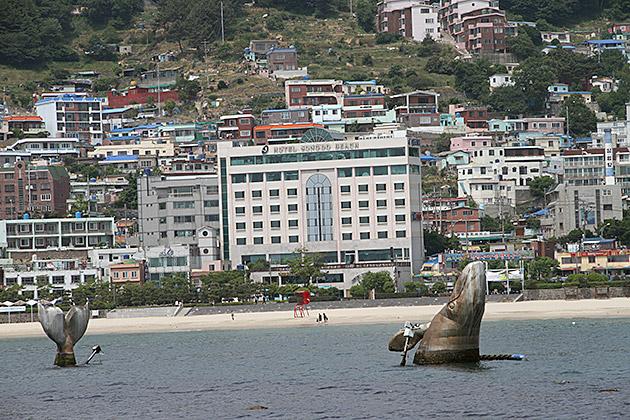 Whale Watching Korea