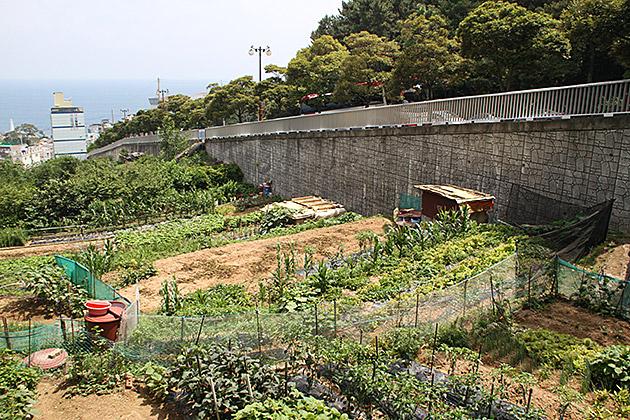 Urban Garden Korea