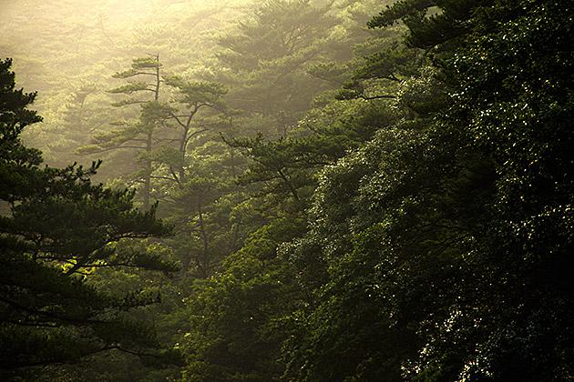 Moody  Beautiful Korea