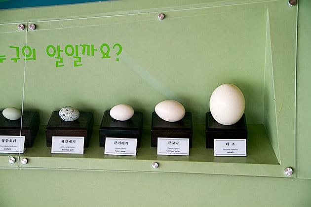 Birdy Egg