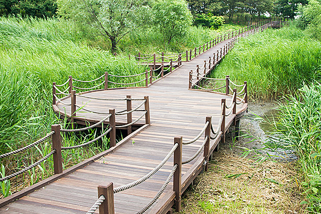 Nature Walk Korea