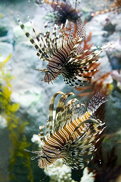 Deadly-Fish-Korea