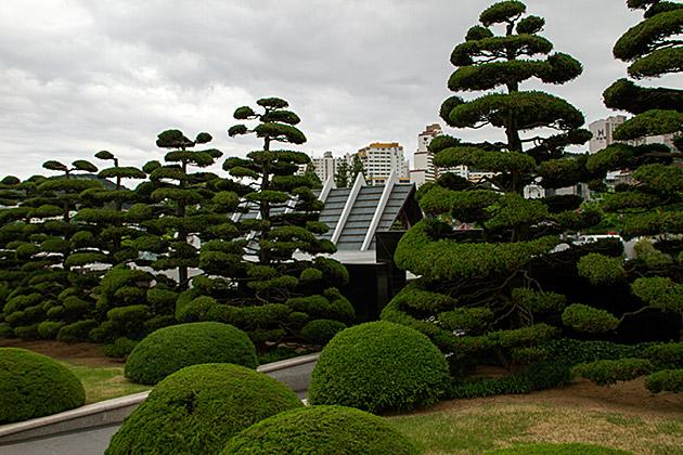 Nibaki Trees