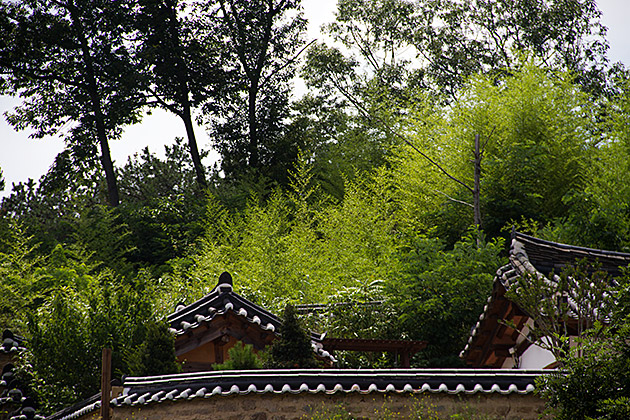 Yangdong-Bamboo